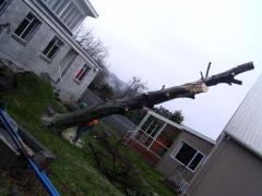 01.08.08 Storm Hits Nelson 051